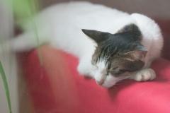 cat-4451